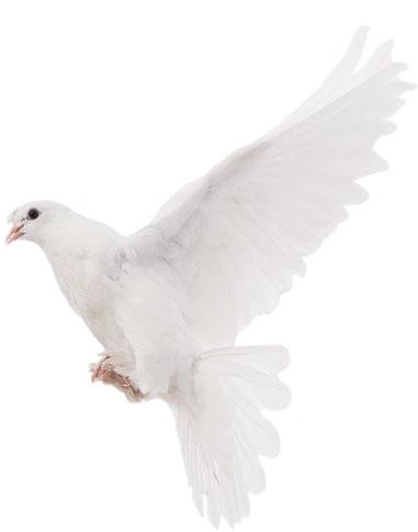 golubok1 Головна